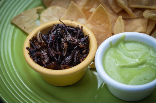 Chapulines, a.k.a. grasshoppers, served with chips and a creamy avocado sauce.